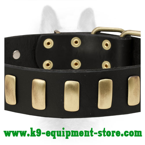 Brass Plates on Walking in Style Leather Canine Collar