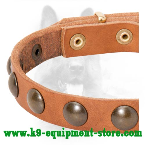 Brass Studs Fixed with Rivets on Leather K9 Collar