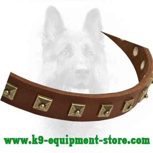 Brass Studs Decorate Leather Canine Collar