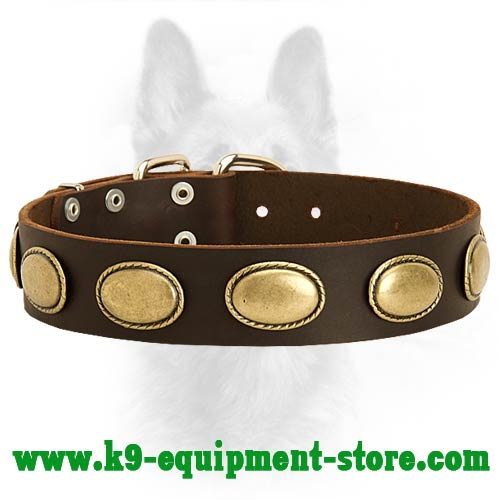 Canine Leather Collar with Plates for Walking in Style