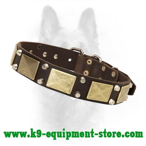 Leather K9 Dog Collar with Brass Plates and Nickel Cones
