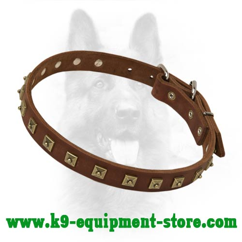 Leather Dog Collar for Canine with Gold-like Studs