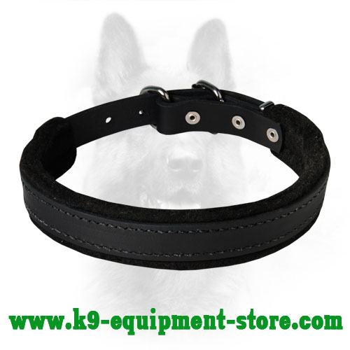 K9 Dog Collar Leather with Steel Nickel Plated Hardware