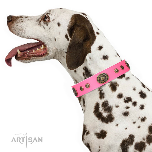 Significant studded genuine leather dog collar for everyday use