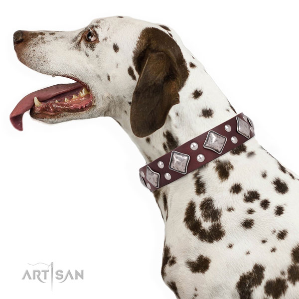 Daily walking adorned dog collar made of top notch genuine leather