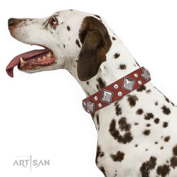 Everyday use studded dog collar made of high quality leather