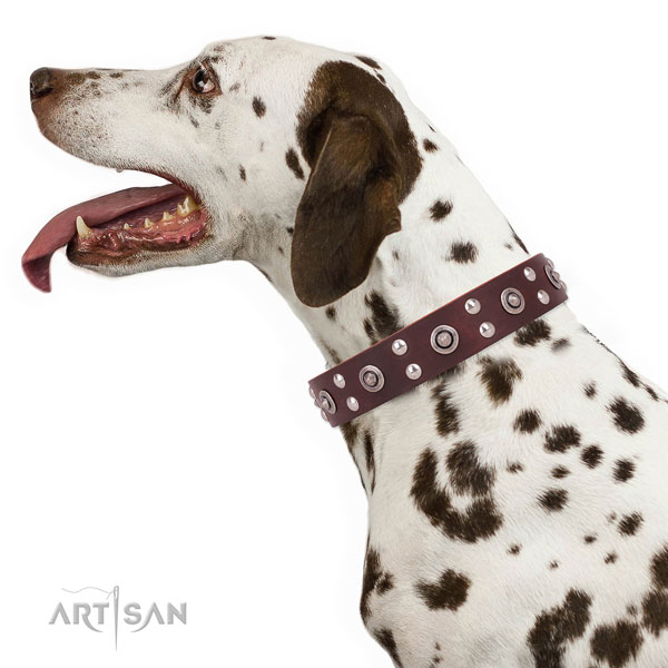 Everyday use dog collar with exquisite studs