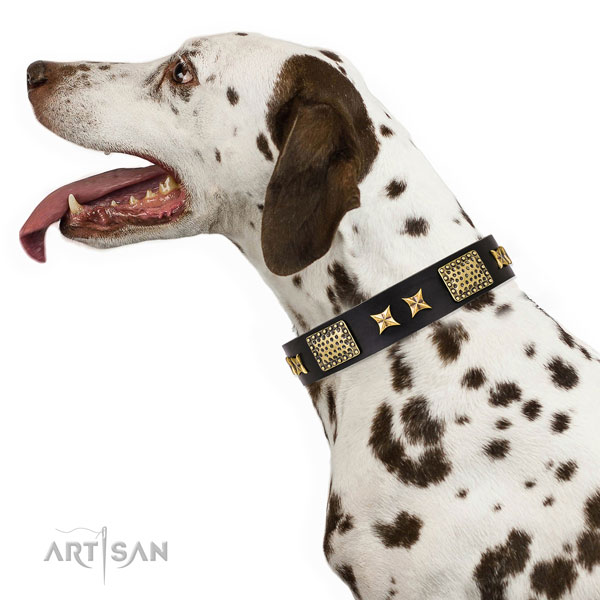 Everyday use dog collar with stylish design studs