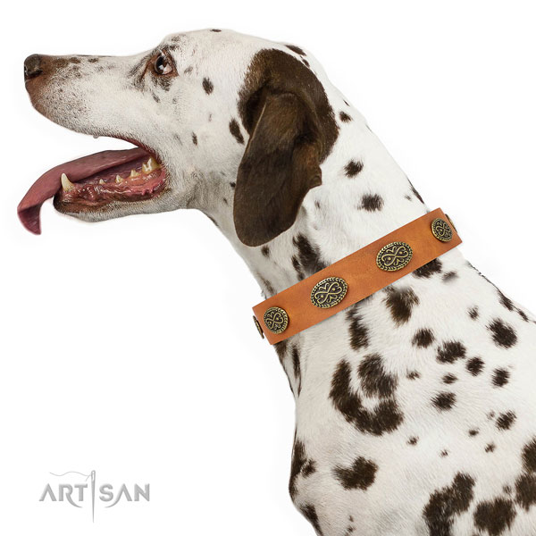 Impressive adornments on walking natural genuine leather dog collar