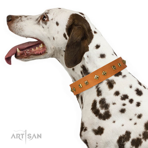 Stunning embellishments on easy wearing dog collar