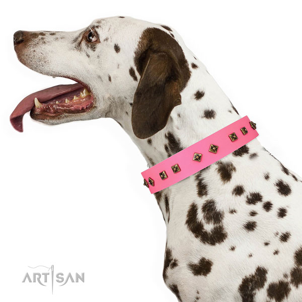 Remarkable adornments on everyday walking dog collar