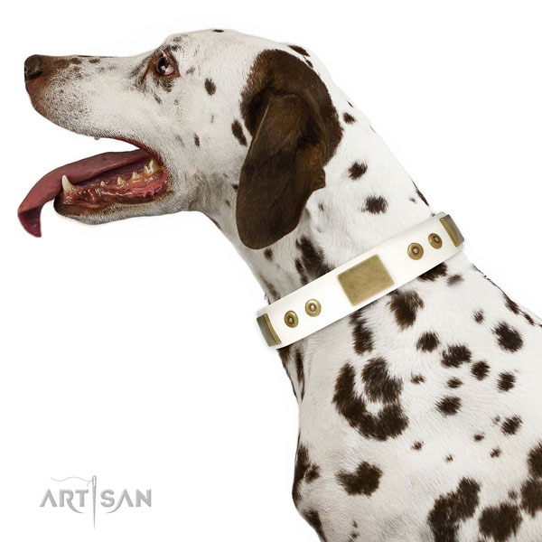 Reliable everyday use dog collar of leather