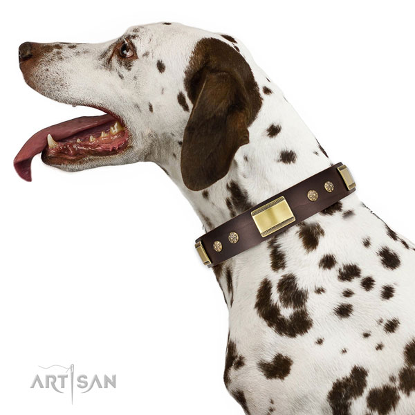 Comfy wearing dog collar of genuine leather with fashionable embellishments