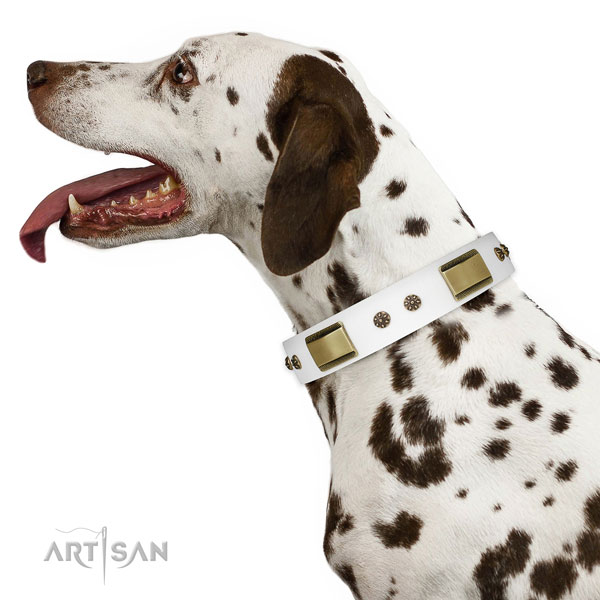 Basic training dog collar of natural leather with unusual studs