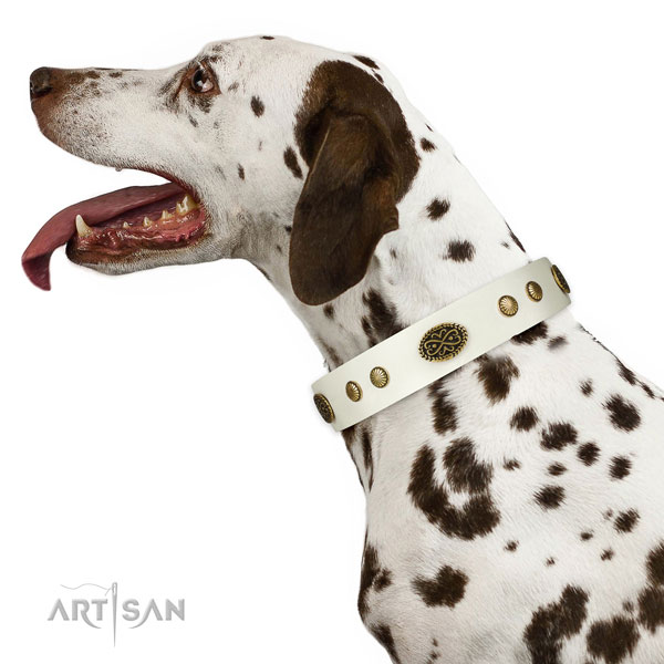 Corrosion resistant traditional buckle on natural leather dog collar for everyday use
