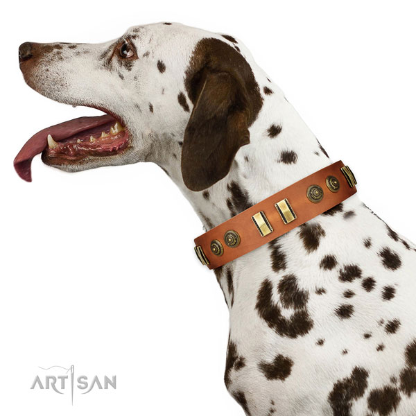 Strong traditional buckle on full grain natural leather dog collar for fancy walking
