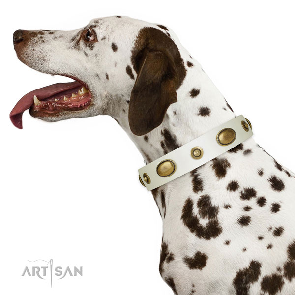 Everyday walking dog collar of genuine leather with significant embellishments