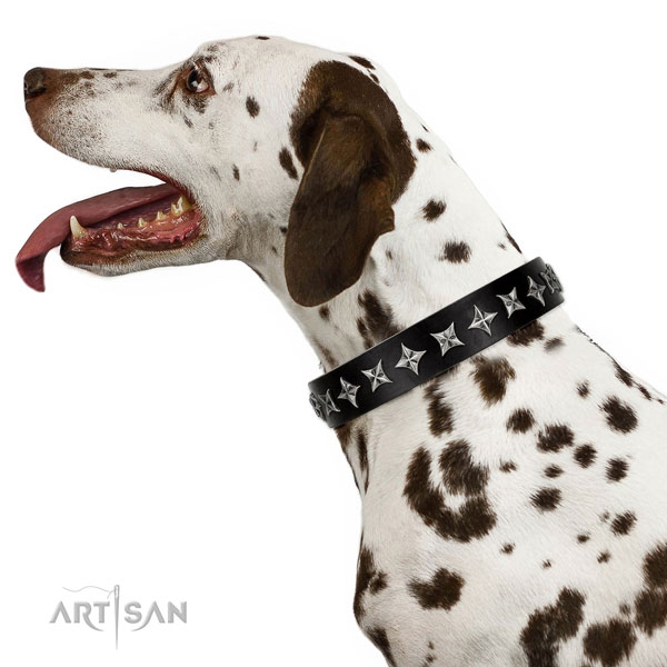 Walking adorned dog collar of quality genuine leather