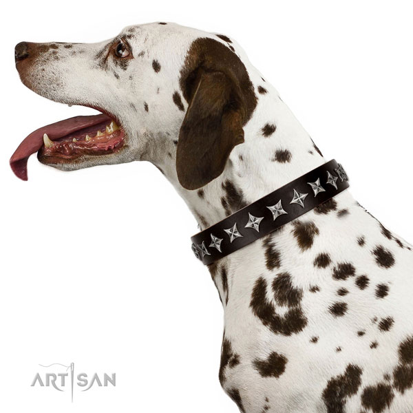 Daily use studded dog collar of top quality natural leather