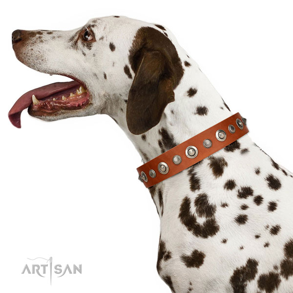 Best quality natural leather dog collar with remarkable studs