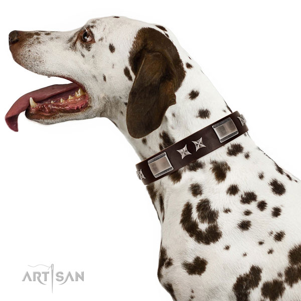 Amazing collar of full grain natural leather for your beautiful dog