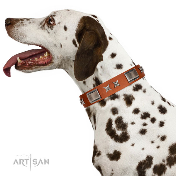 Stylish walking gentle to touch full grain leather dog collar with embellishments
