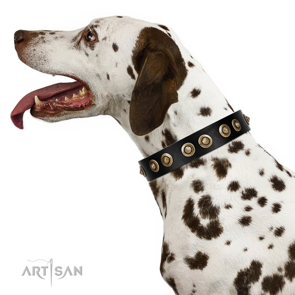 Everyday walking dog collar of genuine leather with remarkable embellishments