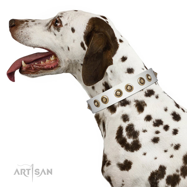 Comfortable wearing dog collar of natural leather with stunning embellishments