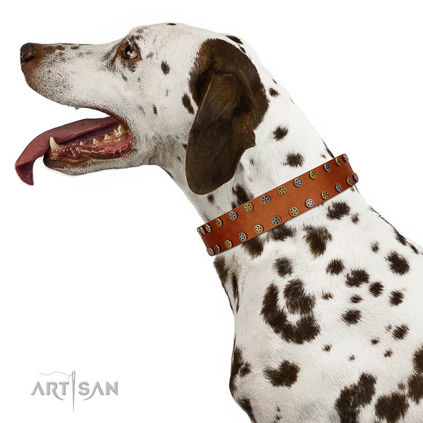 Everyday use top notch natural leather dog collar with adornments