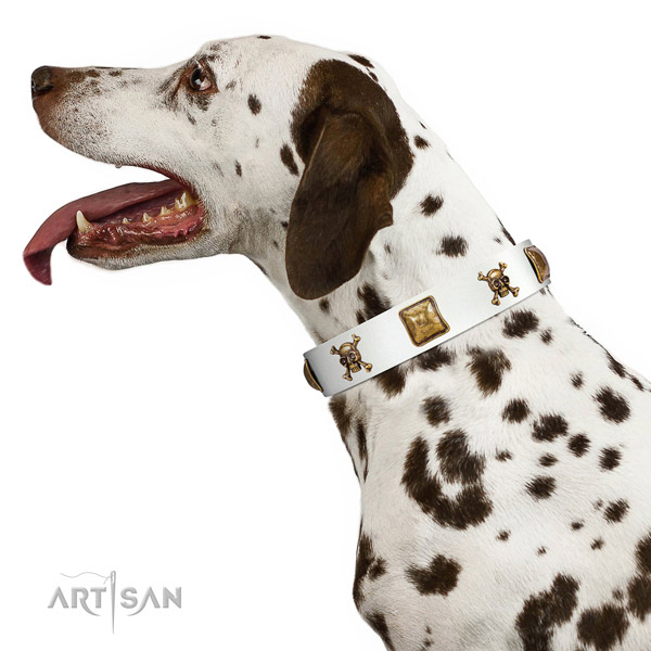 Trendy leather dog collar with reliable embellishments