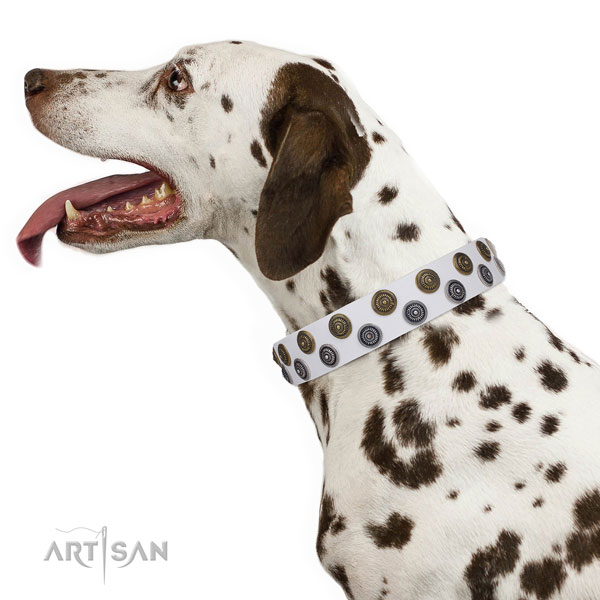 Dalmatian full grain genuine leather dog collar for fancy walking