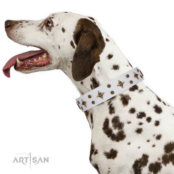 Dalmatian full grain genuine leather dog collar for handy use
