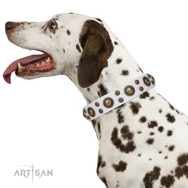 Dalmatian natural genuine leather dog collar for comfortable wearing
