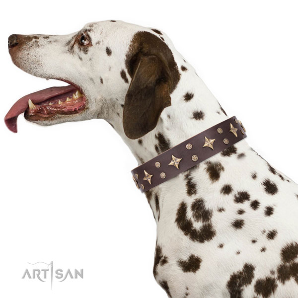 Dalmatian full grain leather dog collar for comfortable wearing