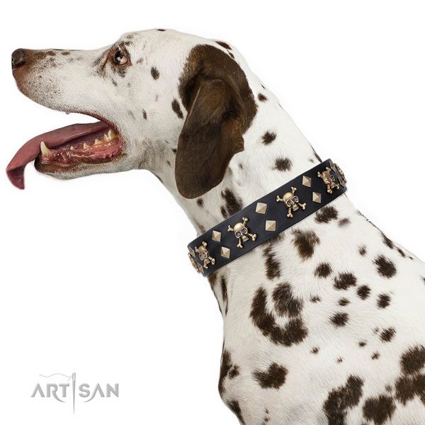 Dalmatian full grain leather dog collar for everyday walking
