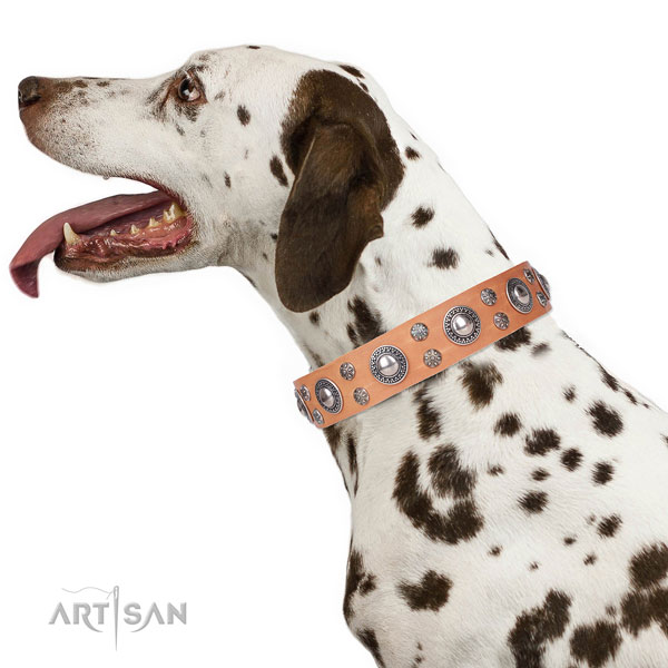 Dalmatian leather dog collar for everyday walking