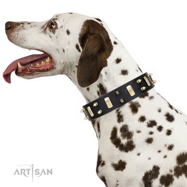 Dalmatian full grain natural leather dog collar for daily walking