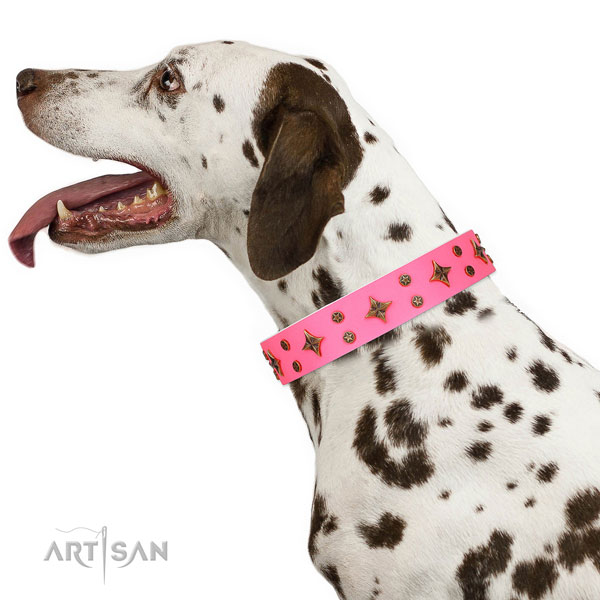 Dalmatian full grain genuine leather dog collar for basic training