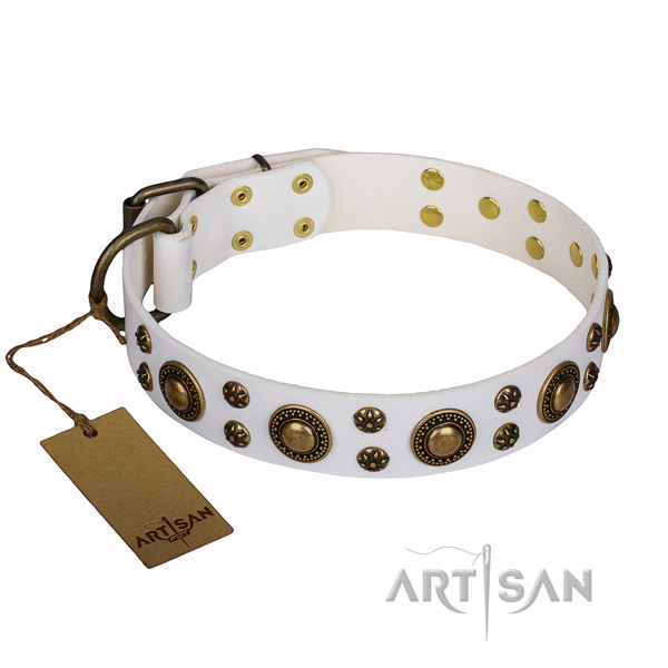 Everyday use genuine leather collar with studs for your pet