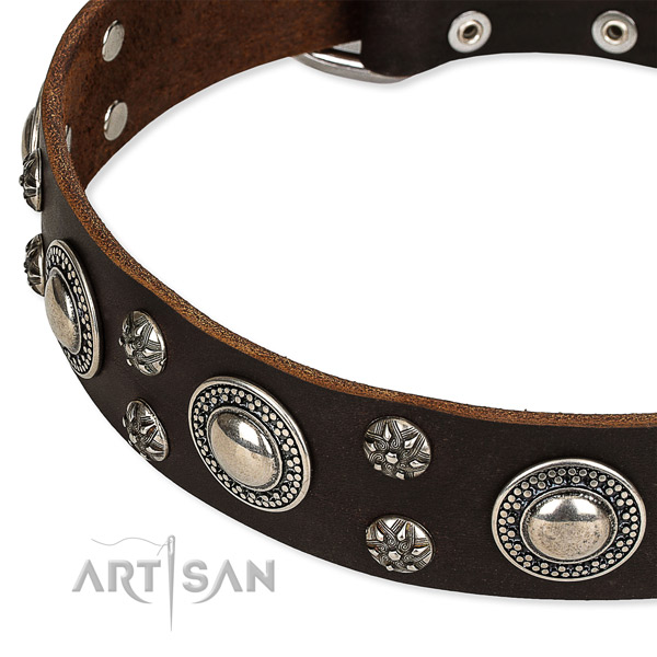 Quick to fasten leather dog collar with extra sturdy durable buckle and D-ring