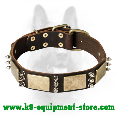 Leather Canine Dog Collar with Massive Brass Plates and Nickel Spikes