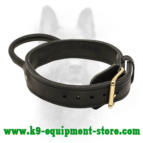 Leather Collar for K9 with Stitched Handle and Gold-like Hardware