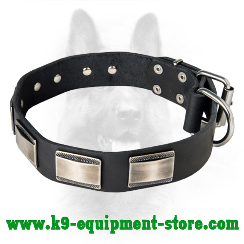 K9 Leather Dog Collar with Rust Resistant Nickel Plates