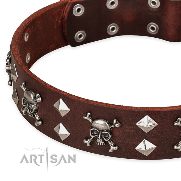 Everyday leather dog collar for reliable usage