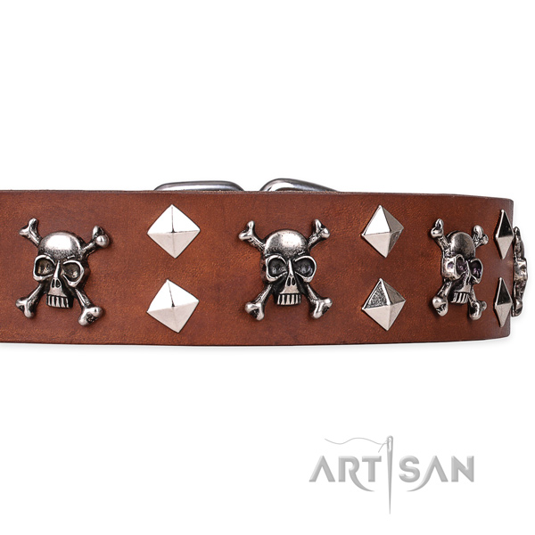 Daily leather dog collar with unique design adornments