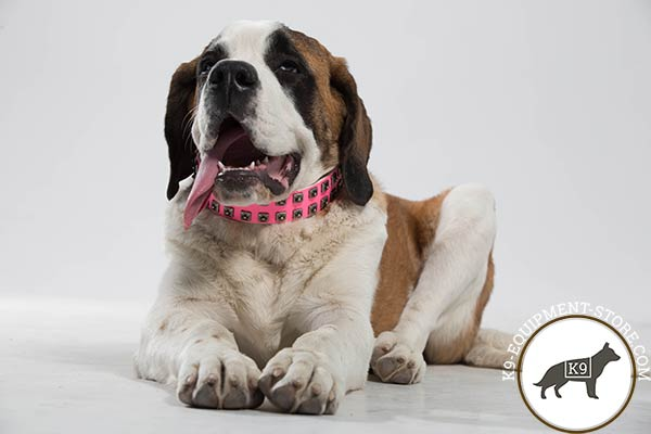Moscow-Watchdog pink leather collar with rust-resistant studs for any activity