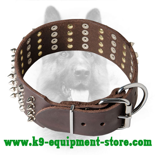 Canine Leather Collar with Steel Nickel Plated Fittings