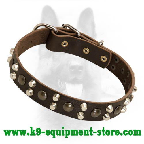 Leather Collar for Police Dog with Brass Studs and Nickel Pyramids