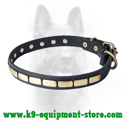 Canine Leather Collar with Rustproof Fittings