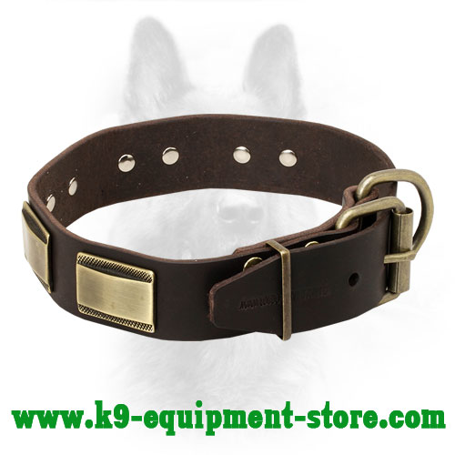 Leather Collar for Canine with Adjustable Brass Buckle